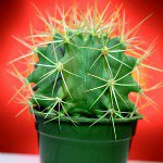 Thanks For The Prickles