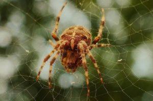 insect-cobweb-spider-spider-s-web-medium
